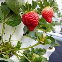 Solución Hidroponica Para Hortalizas Y Frutos Para 1000l