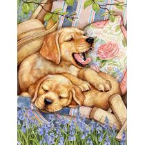 Los Cachorros De Labrador Amarillo Cubierta De La Bandera Ve