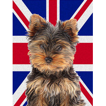 Yorkie / Yorkshire Terrier Con Inglés Union Jack Británica