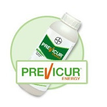 Previcur Energy 1lt Fungicida Control Domping Off Mildiu