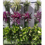 Antiestresante Para Plantas, Presentación 250gr