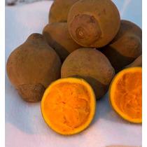 Arbolitos De Zapote Chupa Chupa Quararibea Cordata