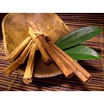 Arbolito De Canela Cinnamomum Zeylanicum
