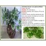 Diseño Canasta Rustica Con Plantas De Seda Maa