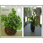 Arreglo Rustico Con Plantas Silk Deda Maa