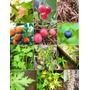 Arboles Ornamentales Y Frutales Del Mundo
