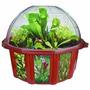 Dunecraft Dome Terrarios - Plantas Carnívoras
