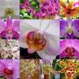 Fertilizante Para Orquídeas