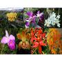 Orquideas Lote De 7 Plantas Mas Regalo