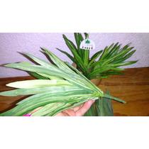 Yuca Verde Artificial En Ramo