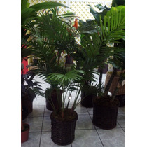 Palma Areca Artificial