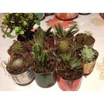 Cactus Y Suculentas Variadas Pequeñas