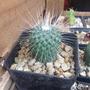 Cactus Exótico