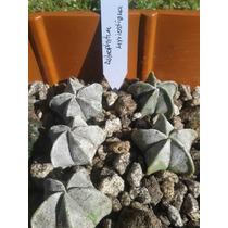 Paquete De Cactus #1 Especies Selectas