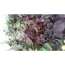 Plantas Miniatura 10 Piezas