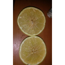 Semillas Limon Real