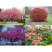 Arboles Florales (cerezo Membrillo Cercis Acacia) 60 Semilla