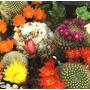 Cactus Mixl 10 Semillas Solo Con Mercadopago Mpsdqro