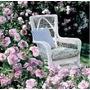 Rosa Trepadora Blue Moon 8 Semillas Flor Jardín Planta Sdqro