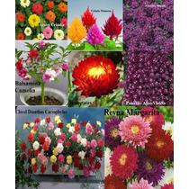 Semilla 9 Variedades Flor Balsamina Panalillo Clavel Celosia