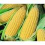 Maiz Dulce Amarillo 10 Semillas Hortaliza Jardín Mpsdqro