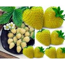 Pack De 100 Semillas De Fresas Amarillas - Raro Hibrido Oooh