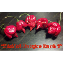 Semillas De Chile Trinidad Scorpion Butch T