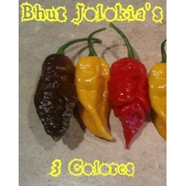 Semillas De Chile Bhut Jolokia (red, Yellow, Chocolate)