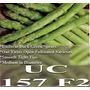 1 Lb De Asparagus Officinalis -esparrago Variedad Uc 157 F2