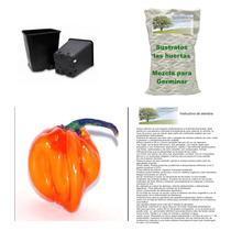 10 Semillas De Chile Habanero En Kit Para Siembra, Completo