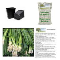 10 Semillas De Cebolla Cambray En Kit Para Siembra Completo