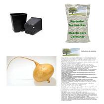 10 Semillas De Jicama Cristal En Kit Para Germinar, Completo