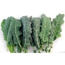 10 Semillas De Kale Toscano, Dinosaurio, Col Rizada Berza