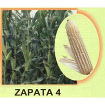 Maiz Hibrido Zapata4 20kg Semilla Para Grano De Temporal