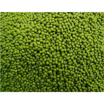 10000 Semillas De Frijol Mungo - Poroto Mung - Mung Bean