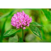 1 Kilo De Trifolium Pratense - Trebol Rojo Var. Kenland