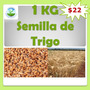 1 Kg De Semillas De Trigo, Cultivo, Germinación, Siembra