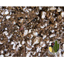 Tierra Sustrato Cactus Suculentas Semillas Germinación