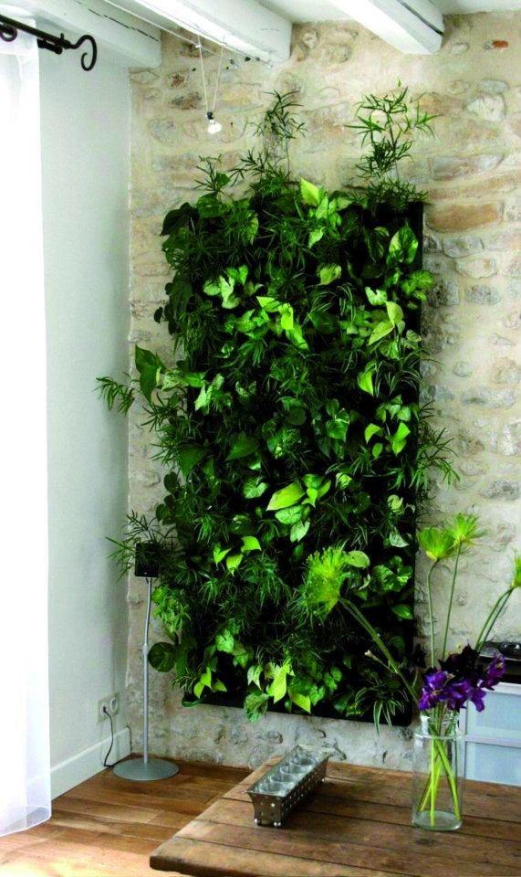 jardines-verticales-decoracion-y-plantas-3507-MLM4398865721_052013-F ...