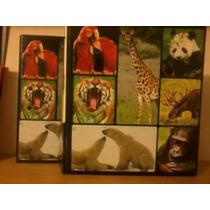 El Facinante Mundo De Los Animales Au1