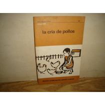 Libretillo, La Cría De Pollos