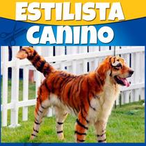 Libro Y 30 Videos Estetica Perros Estilista Canino 2015