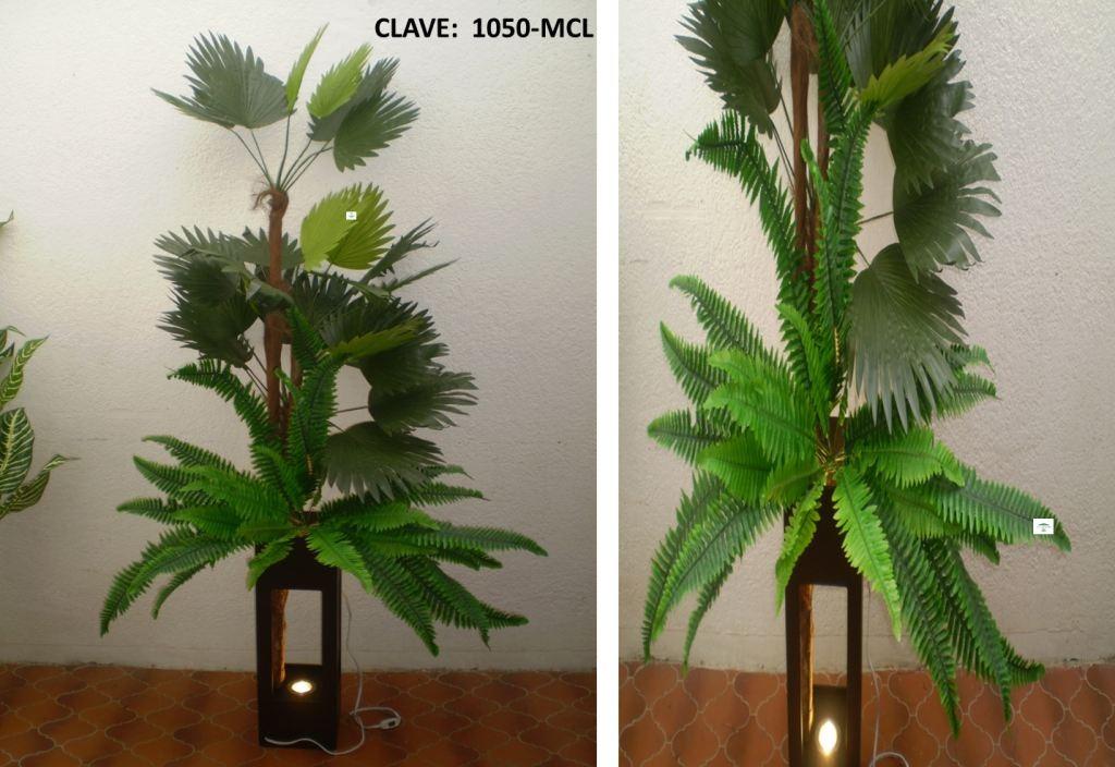 tipos de plantas para macetas v rias