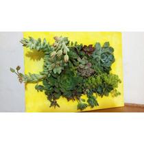 Plantas Suculentas, Cuadro Vivo