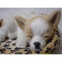 Chihuahua De Peluche Casi Real Y Ronca !!! Unico Y Exclusivo