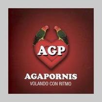 Agapornis Agapornis Cd Nuevo