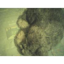 Perrito Dormilon Cachorro De Peluche Juguete De Pilas Remate