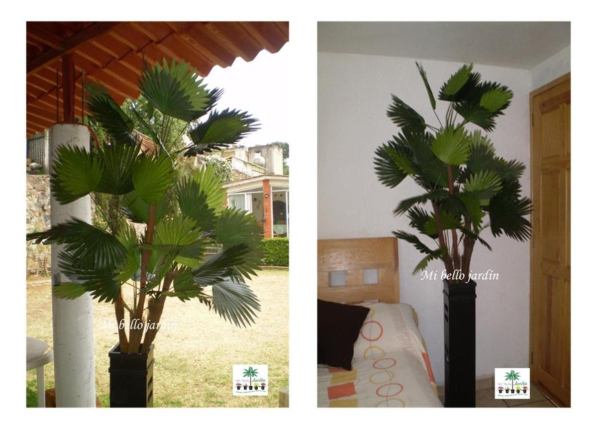 palmeras plantas exterior dise os arquitect nicos