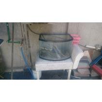 Tortuguero De 50 Litros Con Calefactor Y Cabeza De Poder