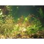 Sustrato Nutritivo Con Plantas Promocion !!acuario Plantado